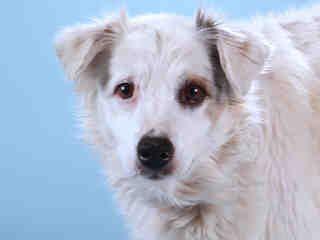 St Louis Pet Adoption Pets Humane Society Pet Adoption
