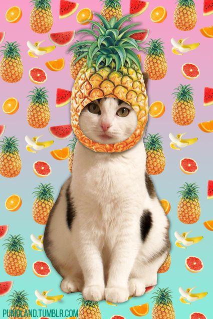 картинки котики с фруктами бразильских
