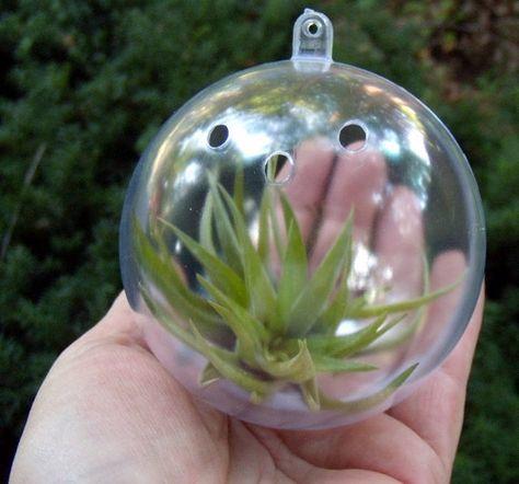 $20 - hanging ball air plant terrarium, love!