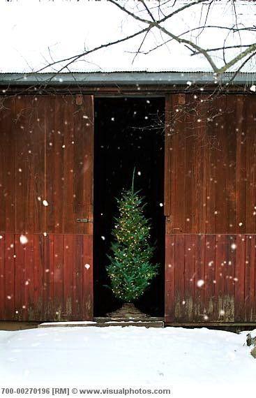VINTAGE barn and christmas tree