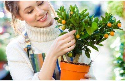 Comment Faire Pousser Des Fruits Et Faire Germer Noyaux Et Pepins