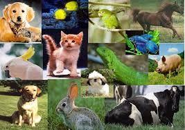 Resultado De Imagen Para 10 Seres Vivos Imagenes De Animales Animales Vertebrados Animal Domestico