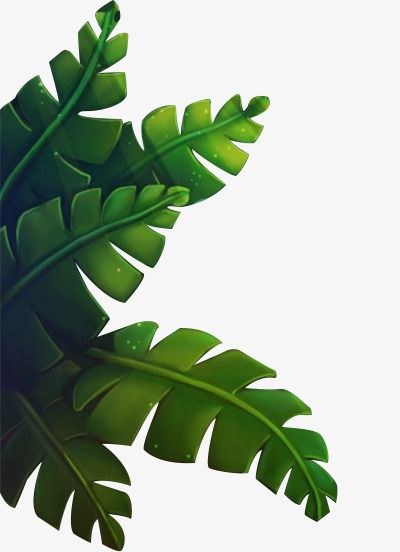 Green Banana Leaves Banana Clipart Stacked Leaves Png Green