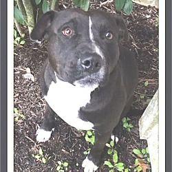 1 8 19 Dog For Adoption In Vermont Pitbull Terrier Pitbulls