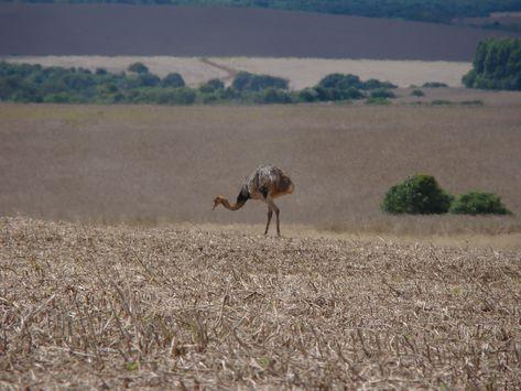 Coronel Bicaco Rio Grande do Sul fonte: i.pinimg.com