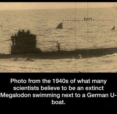 Megalodon 1940's
