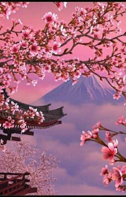 Sakura Edward Cullen X Oc The House Part 1 Cherry Blossom Wallpaper Cherry Blossom Japan Scenery Wallpaper