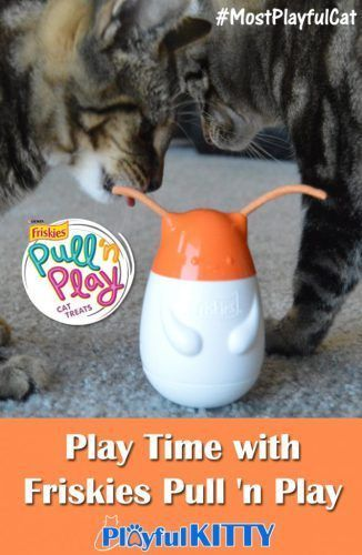 Play Time With Friskies Pull N Play Mostplayfulcat Friskies Cute Dog Collars Cute Cats Photos