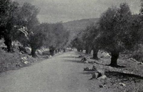 Ramallah رام الله Ramallah Late 19th Early 20th C On Road To Ayn Sinya Palestine Country Roads Pictures
