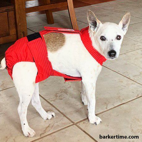 Red Stripes Premium Waterproof Escape Proof Washable Dog Diaper
