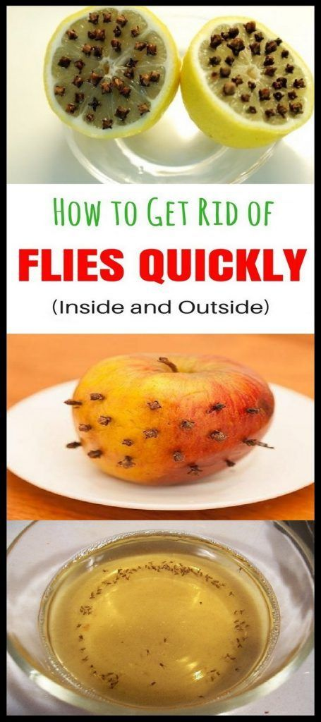 How to Get Rid of Flies Quickly (Inside and Outside