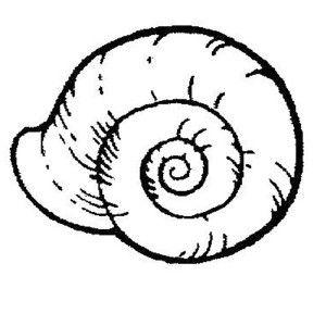Sea Animals Sea Snail Free Coloring Page Sea Snail Free Coloring