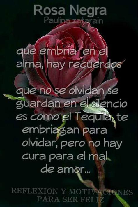 La Rosa Negra 9c8d66afd4354dd9e3e21376c6a1eb47