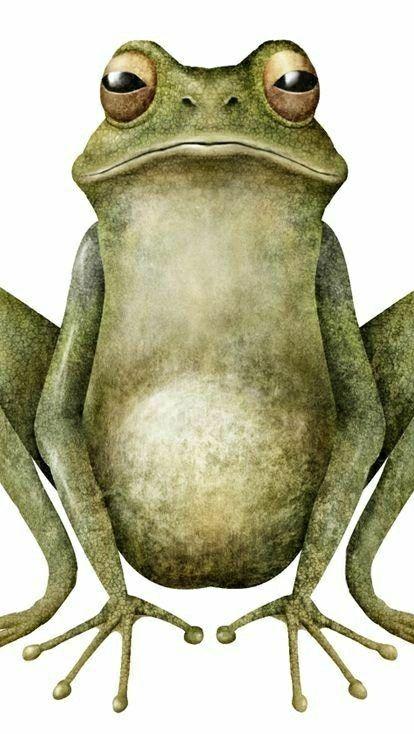 die 14 besten ideen zu frosch malen  frosch zeichnung