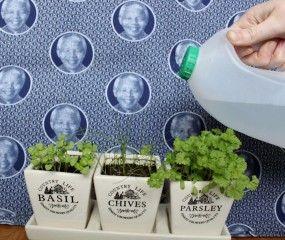 Maak van een lege fles een plantenspuit