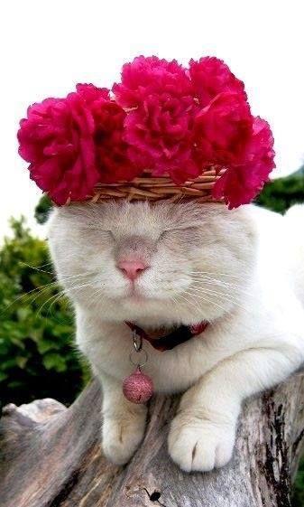 แนวหน า Good News แมว เป นส ตว ตลก Pretty Cats Cats Cute Animals