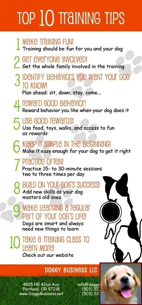 House Training A Puppy For Dummies And Dog Training Courses South Africa Dogcommands Dog House Training Puppies Puppy Training Dog Training Books