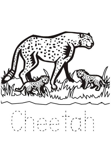 25 Cheetah Coloring Pages Ideas Coloring Pages Cheetah Coloring Pictures
