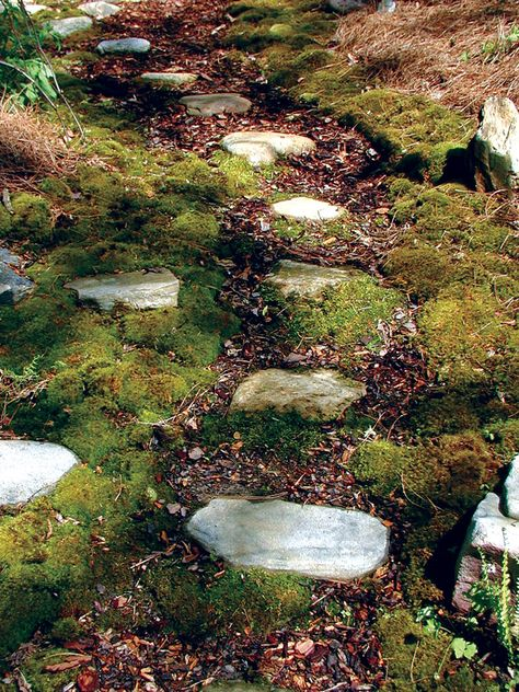 Propogate Moss Ingredients Palm Sized Clump Of Moss 1 Cup Of