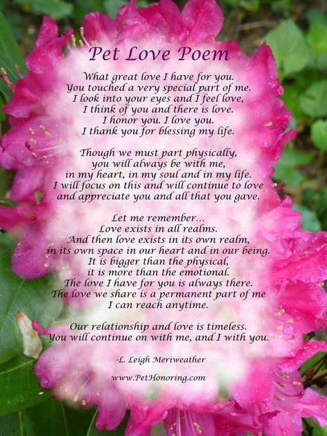 For the Love of my Natty Girl...  She wasn't my pet she was my Baby, my Friend & my Confidant l miss her so...