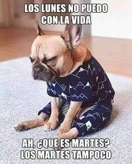 Memes De Perros Perros Divertidos Perros Y Gatos Tiernos Perros Bulldog Frances