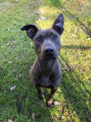 Adopt Veronica On Pets Needing Home In South Carolina Dogs