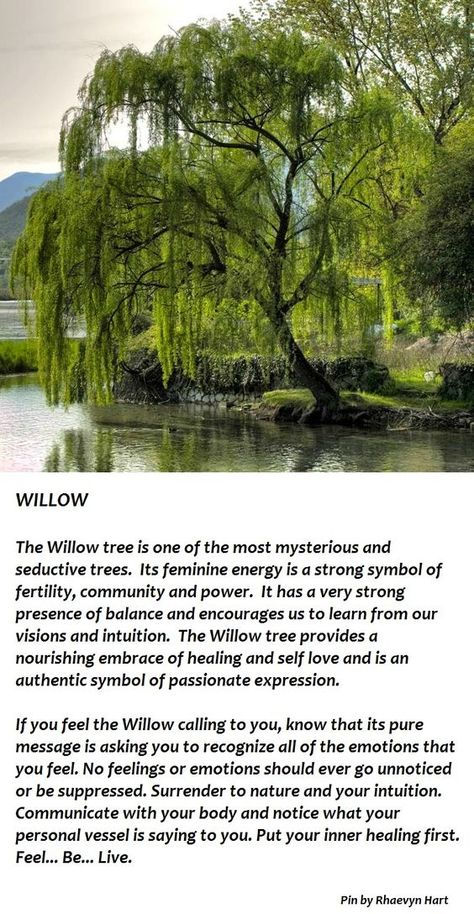 Trees Associated With Mondays – The Willow | Witches Of The Craft®