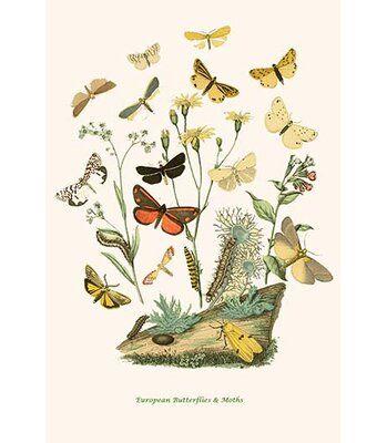 Buyenlarge European Butterflies And Moths Graphic Art Print Wayfair In 2020 Graphic Art Print Graphic Art Art