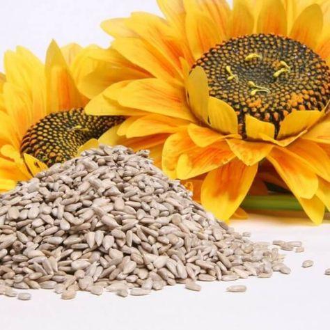 Ulei de floarea-soarelui din vene varicoase