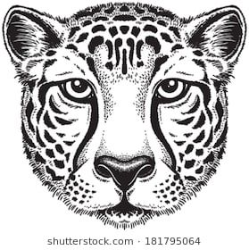 Black And White Vector Line Drawing Of A Cheetah S Face Line Drawing Cheetah Face Cheetah Drawing
