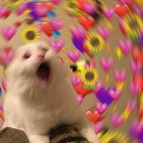 Begleiter Bereiten Diese Erstaunliche Freude Ihnen Katzen Liebenswerten Sind Werden Liebenswerten In 2020 Cute Cat Memes Cute Love Memes Cat Memes