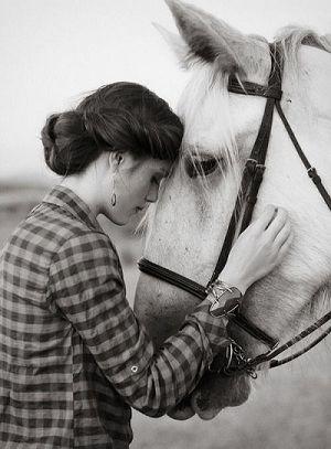 صور خيول بيضاء اصيلة صور حصان ابيض اخبار العراق Horses Horse Ears Horse Inspiration