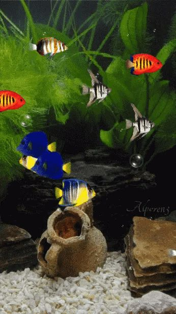 Pin By Edna Marroquin On Grace Fish Gif Beautiful Gif Animation