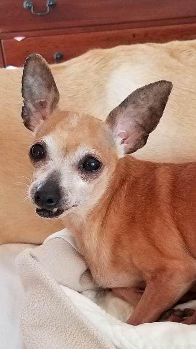 Adopt Mawmaw On Pets Needing A Home In Alabama Adoption Pet