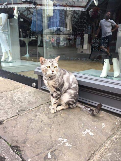 Dexter On Twitter Cats Animals Animal Art