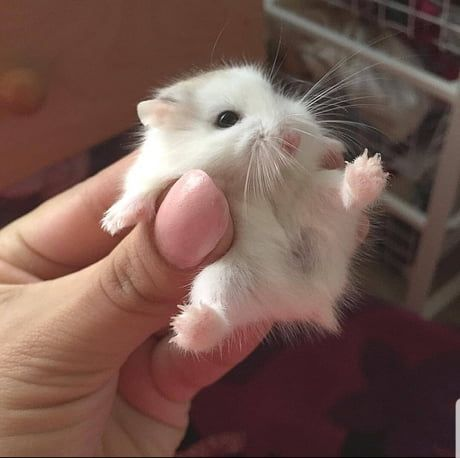 One Please D Cute Little Animals Cute Baby Animals Cute Hamsters