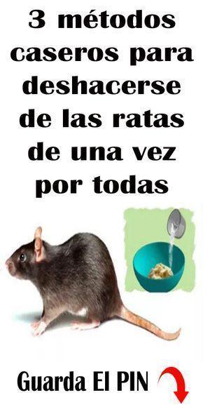 Como Acabar Con Las Ratas En El Jardin Manera Poco Conocida De Limpiar Los Quemadores De La Estuf