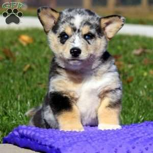 Pin By Greenfield Puppies On Mixed Breeds Mixed Breed Breeds Animals