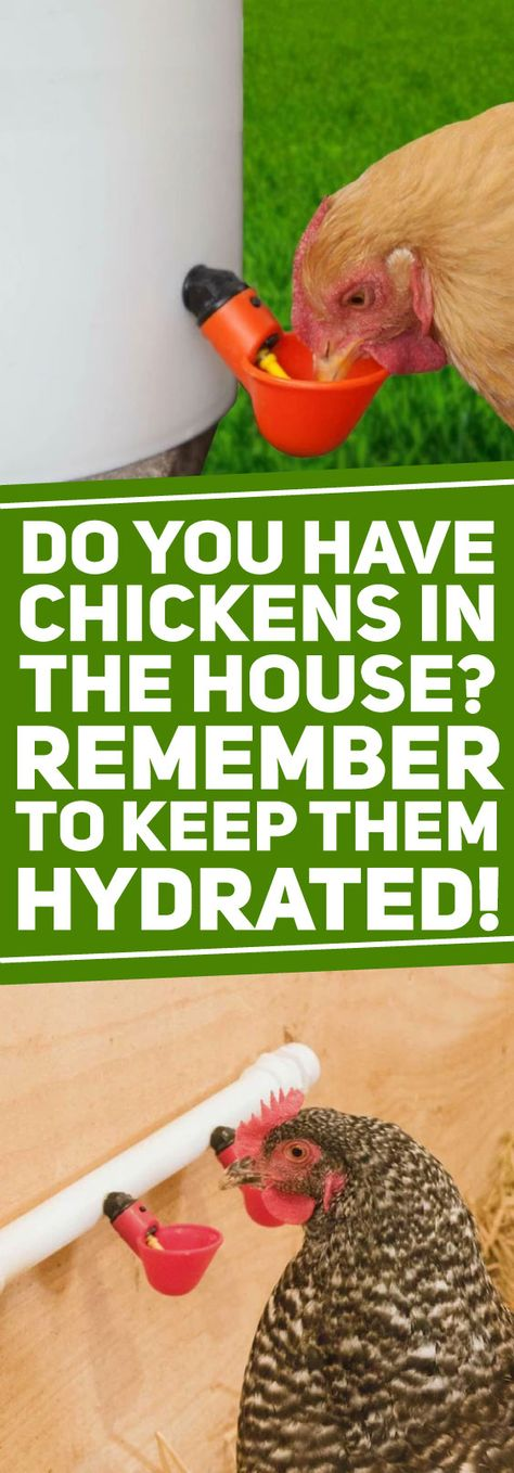 Providing water to your poultry in containers is a thing of the past.
