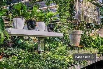 Flora Point Najmodniejsze Rosliny Do Domu I Ogrodu Najwiekszy Wybor Roslin Domowych Oraz Ogrodowych Nowoczesna Kwiaciarnia Rosliny Oczyszcza Plants Nature