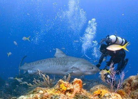 Underwater Photographer Pay Scale Photography Tips Pinterest - marine biologist job description