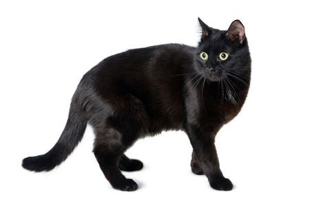 National Black Cat Appreciation Day Is August 17 2017 Black Cat Appreciation Day Cats Cats And Kittens