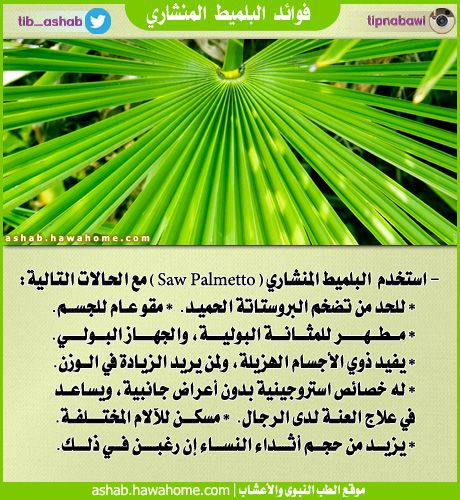 فوائد البلميط المنشاري الطب النبوي والاعشاب Herbs