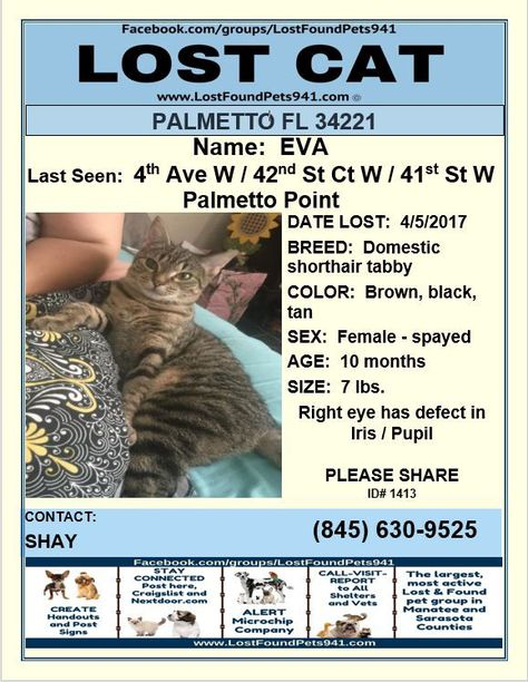 Have You Seen Eva Lost Cat Tiger Please Rt Lostpetservices Palmetto Fl Losing A Pet Service Animal Lost Cat