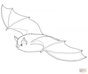 Bat Coloring Pages For Your Kids Museum Bat Coloring Pages