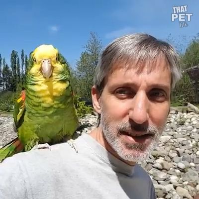 All These Parrots Are well Trained & cute  #cute #Parrots #Trained   All These Parrots Are well Trained & cute   Compilation of parrots playing with their partners. Please follow Animals Board for more videos