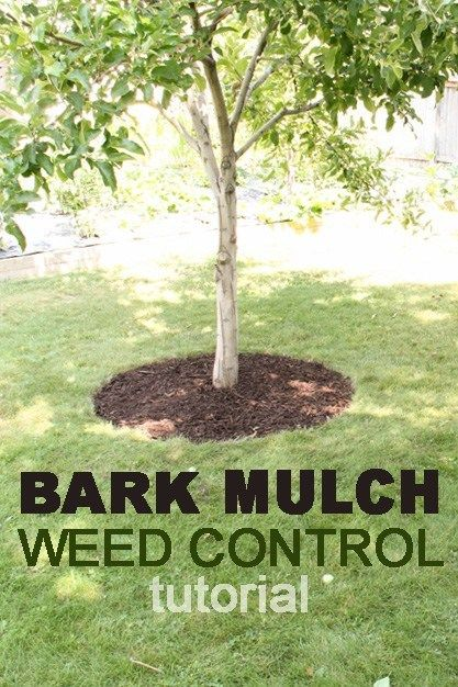 We Are Sharing Our Tips For Adding Mulch And Keeping It Looking Beautiful Read All About Mulch W Landscaping Around Trees Mulch Around Trees Mulch Landscaping