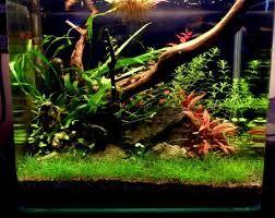 Planted Aquarium Substrate Layers Planted Aquarium Low Tech Aquarium
