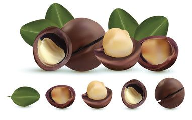 Nuts Macadamia Isolated On White Background Nuts Shelled And Unshelled With Green Leaf Tasty Macadamia Nuts Organic In 2020 Macadamia Nuts Stuffed Shells Macadamia