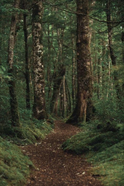 Disparo vertical de un hermoso bosque co... | Free Photo #Freepik #freephoto #arbol #viajes #agua #madera